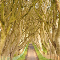 follow-the-colours-Game-Of-Thrones-DarkHedges-irlanda